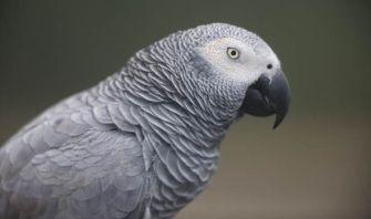 parrot-631628