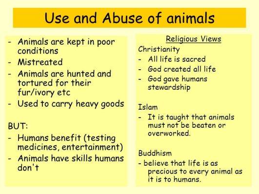 an argument against the use of animals in research testing and education An argument against the use of animals in research,  more essays like this: animal testing, animal welfare act, animals in research, laboratory animals.
